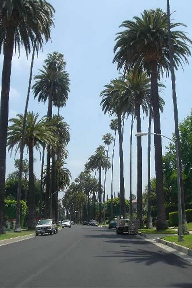 Los Angeles Palmiyeler